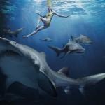 Отдых в Египте: не бойтесь акул!