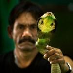 Праздник змей в Индии