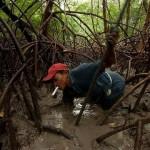 Как в Бразилии ловят крабов!