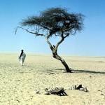 Пустыня Тенере — это не только песок!