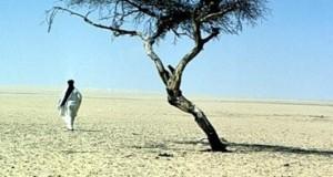 Пустыня Тенере - это не только песок!