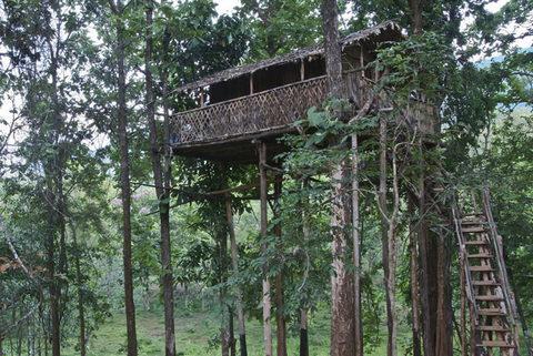 Отель на дереве, Керала, Индия