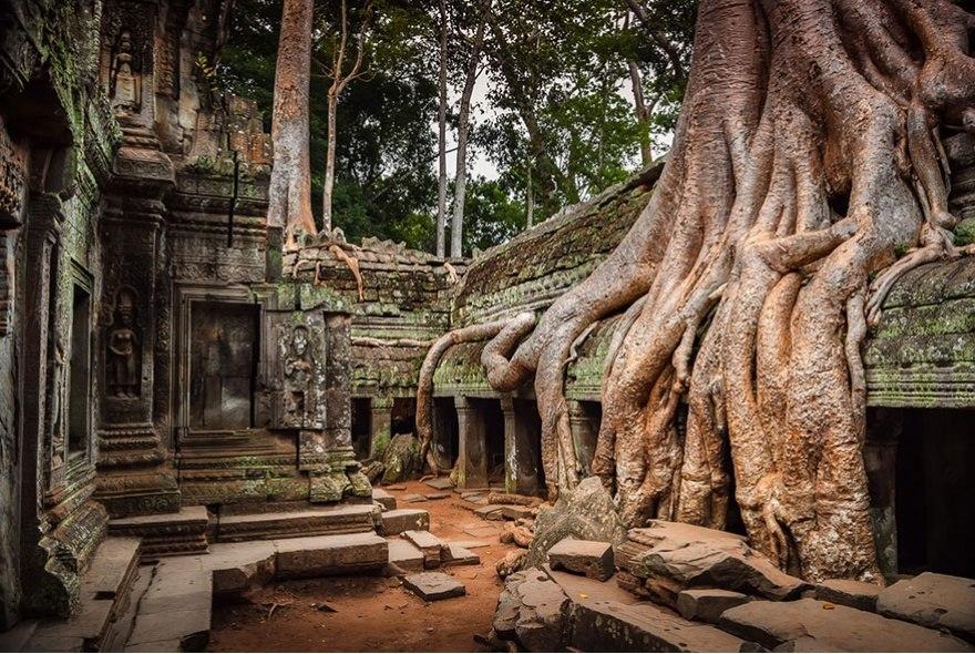 Ангкор, Камбоджа. Природа берёт своё