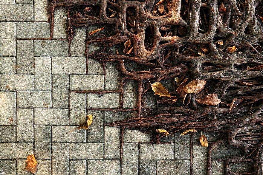 Корни дерева повторяют рисунок кирпичного тротуара.
