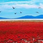 Красный пляж Паньцзинь — не иллюзия