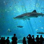 Подводный мир Лангкави