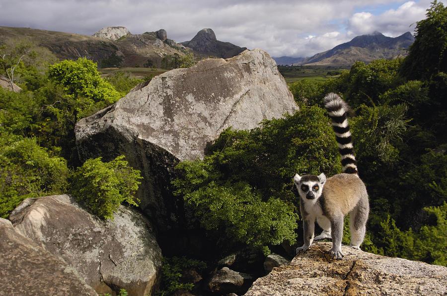 Национальный парк Амбер Маунтин