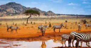 Топ-9 главных достопримечательностей Кении