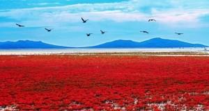 Необычные места планеты: Красный пляж Паньцзинь (Китай)