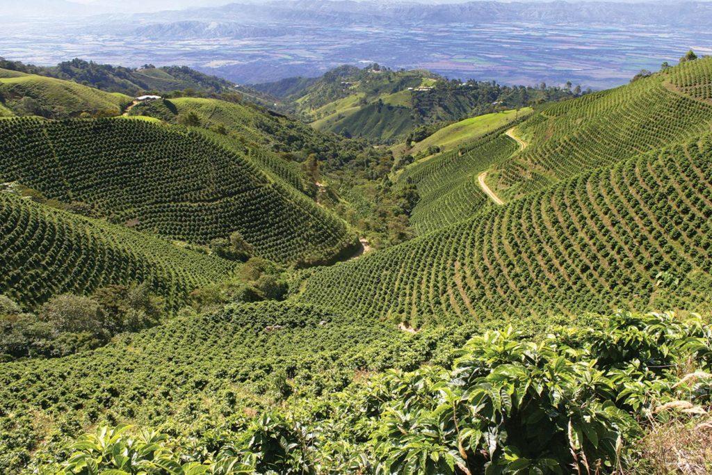 Кофейная зона в Колумбии